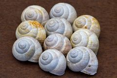 Snail houses Royalty Free Stock Image