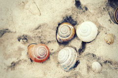 Snail houses on rock Stock Images