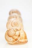 Snail houses on white Stock Photos