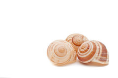 Snail houses on white Royalty Free Stock Photography