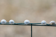 Snail houses on a wire fence Stock Image