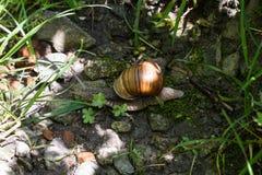 Snail i gr?set royaltyfria foton