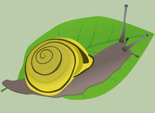 A snail Royalty Free Stock Photos