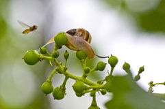 Snail and insect Stock Image
