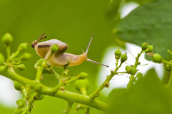 Snail and insect Royalty Free Stock Images
