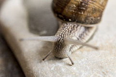 Snail investigating Stock Images