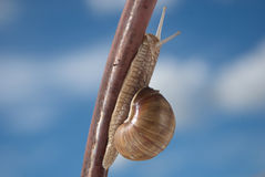 Snail on the iron bar. With blue sky in a background. Horizontal version Royalty Free Stock Photos