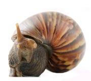 Snail Stock Photography