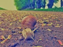 A snail on its way to New York Royalty Free Stock Photography