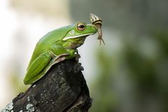 Snail and Frog. Snail joke on the noise frog royalty free stock image