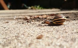 Snail journey Stock Photography