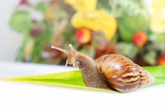 Snail - journey to success. Snail - life is a journey, enjoy the beautiful ride Royalty Free Stock Images
