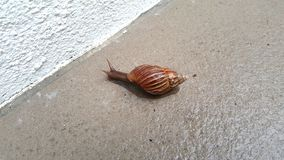 A snail Stock Photography