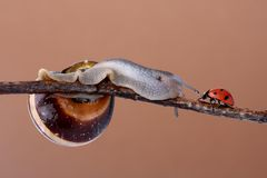 Snail and ladybird Royalty Free Stock Photos