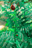 Snail and ladybug holding on fern with natural light Royalty Free Stock Image