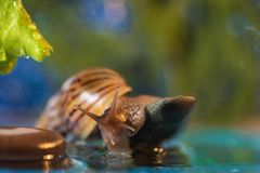 Snail on the lake Stock Images