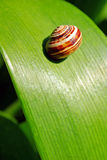 Snail on leaf Stock Photo