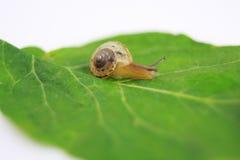 Snail on leaf Stock Photos