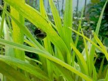 Snail Leaf Stock Photos
