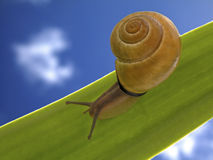 Snail in the leaf Stock Images