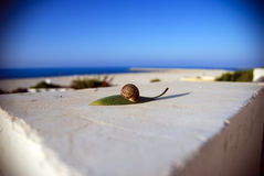 Snail on a leaf. Sm Royalty Free Stock Photo