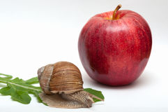 Snail on leaf. apple. Stock Photography