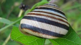 Snail. On the leaf in the garden Stock Image