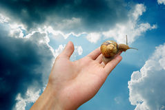 Snail life Stock Images