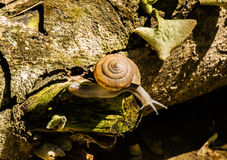 Snail life Royalty Free Stock Photography
