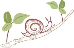 Snail On Limb Royalty Free Stock Photo