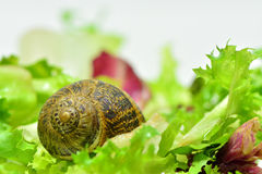 Snail. A little snail very curious Stock Image