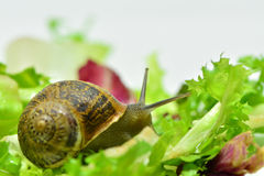 Snail. A little snail very curious Stock Photos