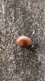 Snail. A little snail on the wall Royalty Free Stock Photo