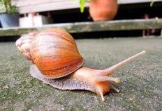 Snail livelihood in garden Royalty Free Stock Photo