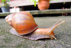 Snail livelihood in garden Royalty Free Stock Photography