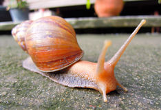 Snail livelihood in garden Stock Photos