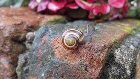 Snail Stock Photography