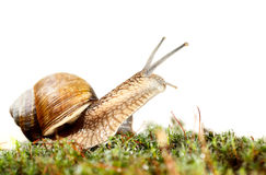 Snail look Royalty Free Stock Photography