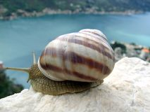 Snail looking at the bay Stock Photography