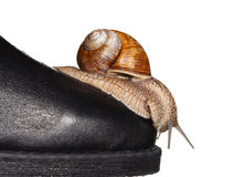 Snail looking down from boot toe Royalty Free Stock Photo