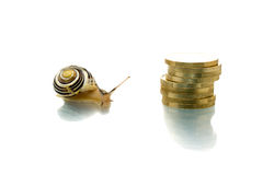 Snail looking at screen plus a coin pile Royalty Free Stock Image