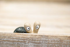 Snail looking to you. Snail look over the edge of the tray Stock Photo