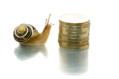 Snail looks curiously at coins Royalty Free Stock Photo
