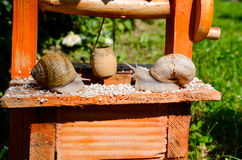 Snail love Stock Photos