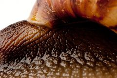 Snail macro Stock Photos