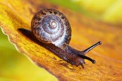Snail macro Royalty Free Stock Photo