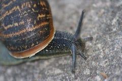 Snail in macro Stock Image