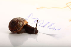 Snail macro with letter Royalty Free Stock Images
