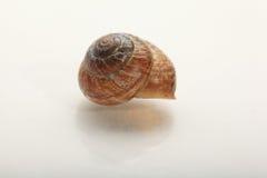 Snail macro Royalty Free Stock Photos