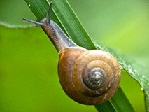 Snail macro photo Stock Photos